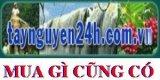 www.taynguyen24h.com - mua gì cũng có